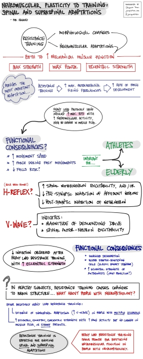 Neuromuscular Plasticity to Training: Spinal and Supraspinal Adaptations - keynote lecture by Prof Per Aagaard - Australian Conference of Science and Medicine in Sport | Sketchnotes by Jacquie Tran